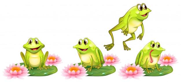 Vier groene kikkers op waterlelie