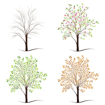 Vier seizoenen bomen