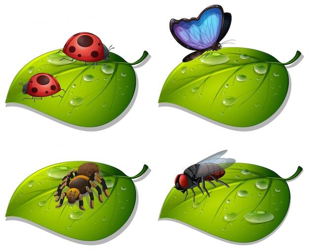 Vier soorten insecten op groene bladeren