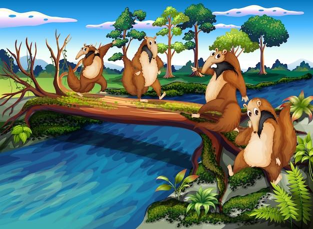 Vier speelse wilde dieren die de rivier oversteken