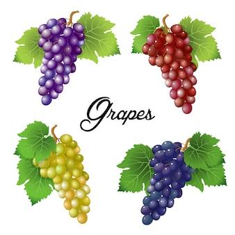 Vier takken met druiven
