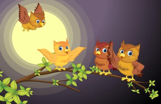 Vier uilen