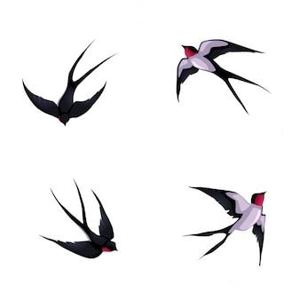 Vier zwaluwen geïsoleerd vector cartoon dieren