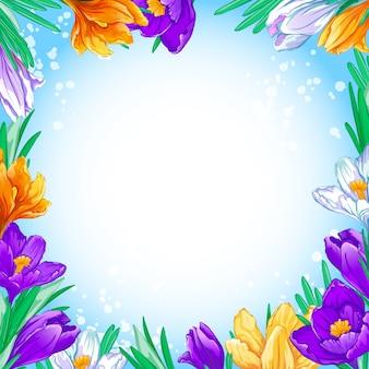 Vierkant frame voor tekst of foto met lente bloeiende heldere krokussen.