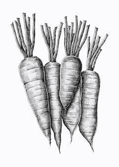 Vijf handgetekende wortelen vector