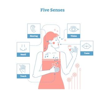 Vijf menselijke zintuigen