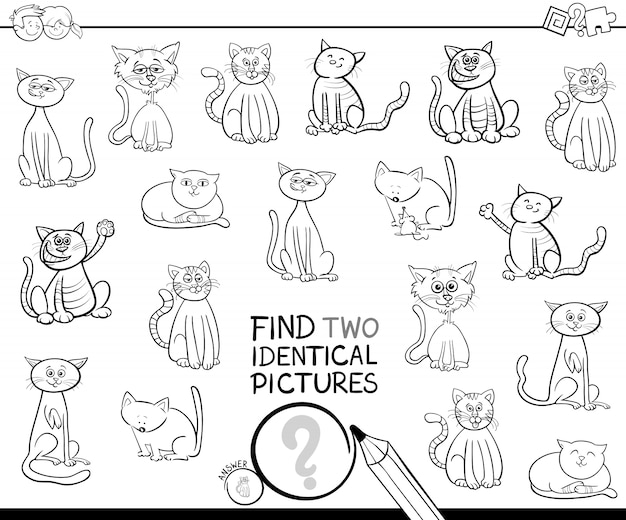 Vind twee identieke kattenfoto's kleurboek