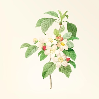 Vintage bloem illustratie