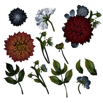 Vintage bloemenreeks. dahlia's. set florale decoraties.