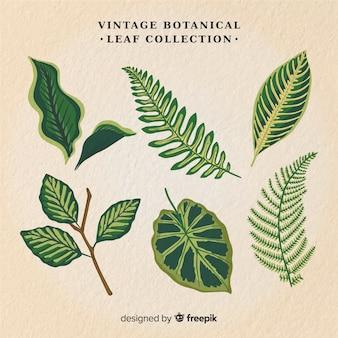 Vintage botanische bladcollectie