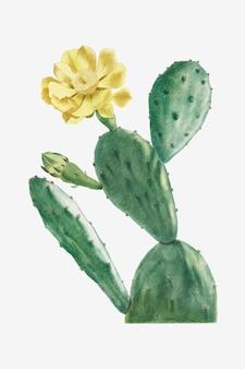 Vintage cactus opuntia vector