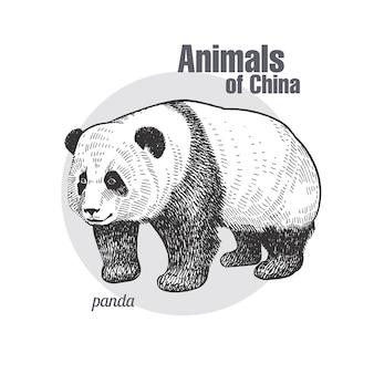Vintage gravure van dierlijke panda.