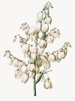 Vintage illustratie van aloë-yucca