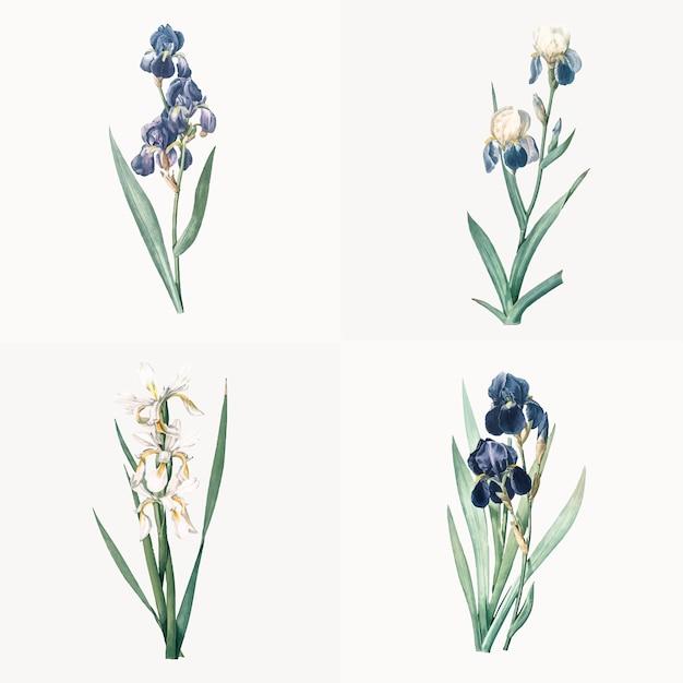 Vintage illustratie van set van iris