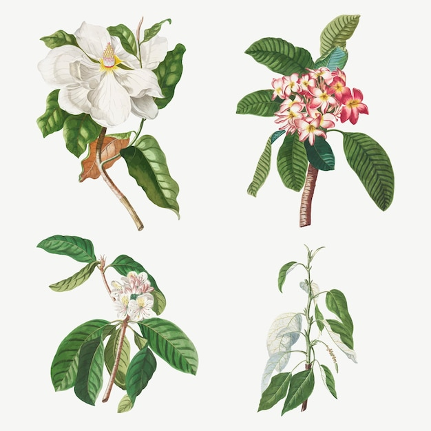Vintage illustratiereeks van magnolia, plumeria, guavebloem en balsempopulier
