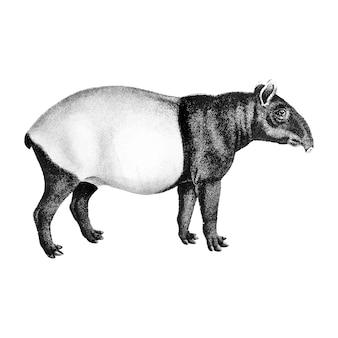 Vintage illustraties van de maleise tapir