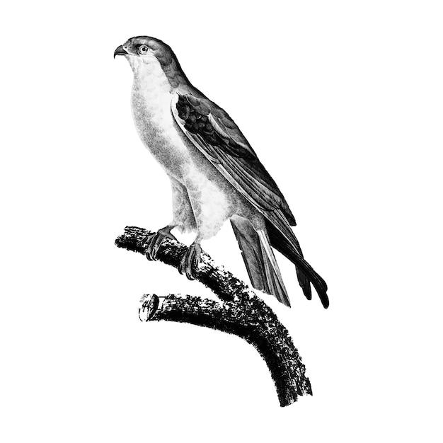 Vintage illustraties van de vlieger met zwarte vleugels