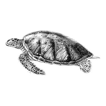 Vintage illustraties van groene zeeschildpad