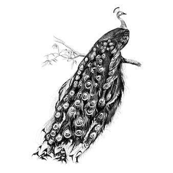 Vintage illustraties van peacock