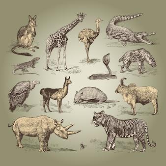 Vintage klassieke dieren vectorsjablonen