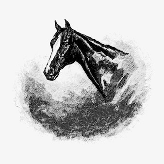 Vintage paard hoofd illustratie