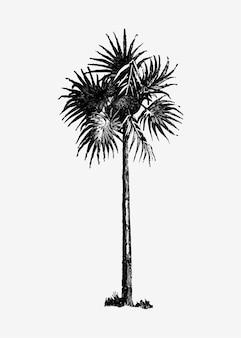 Vintage palmboom illustratie