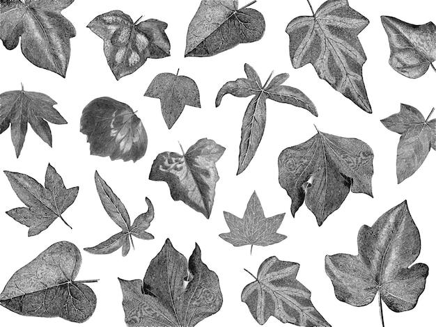 Vintage planten en bladeren illustratie