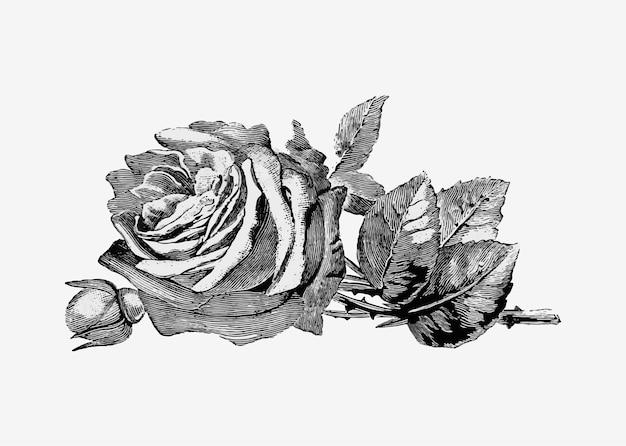 Vintage roos illustratie