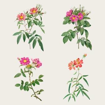Vintage roze bloem vector collectie