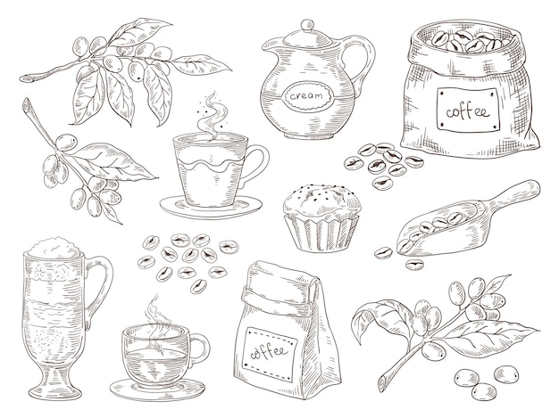 Vintage schets van koffie bladeren tak geroosterde bonen en tas