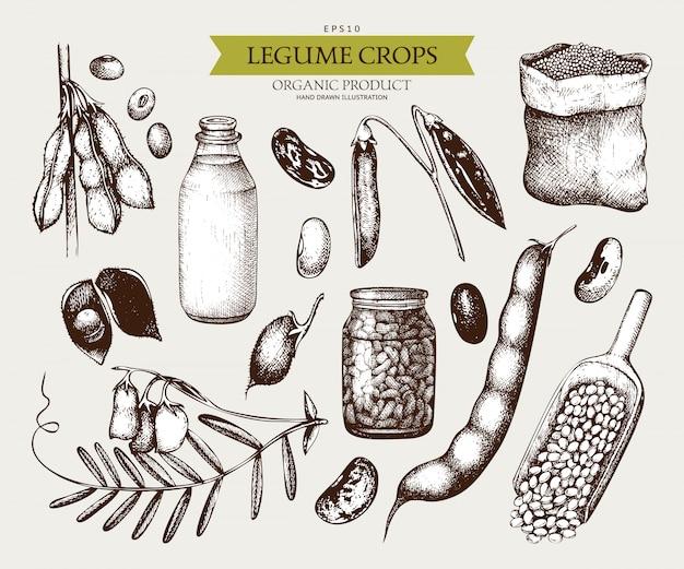 Vintage set van peulvruchten planten en boerderijproducten in vintage stijl