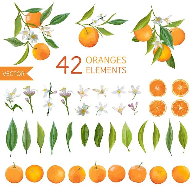 Vintage sinaasappelen, bloemen en bladeren. citroen boeketten