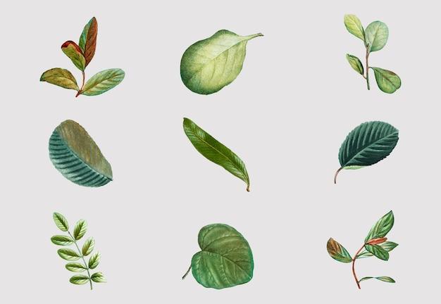 Vintage tropische blad vector set hand getrokken gebladerte
