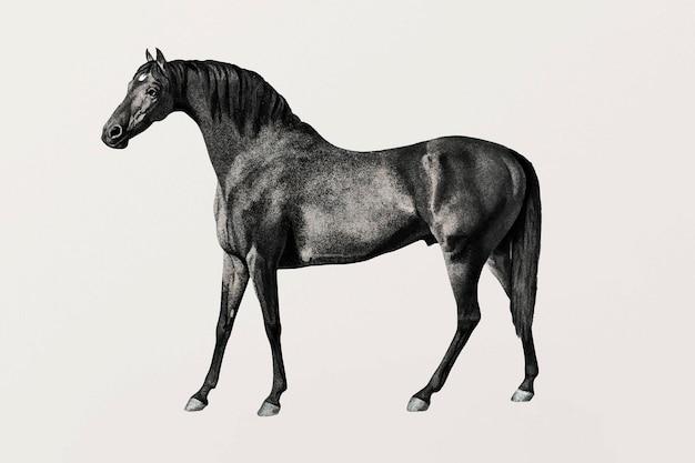Vintage vectorillustratie paard, geremixt van kunstwerken van george stubbs