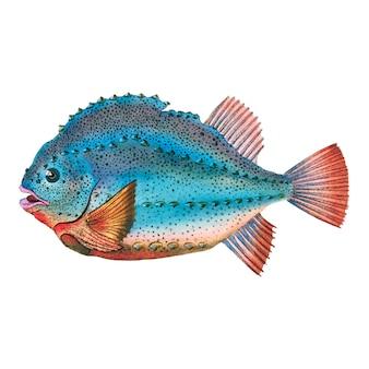 Vintage vis illustratie