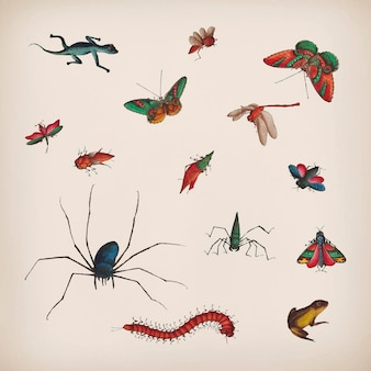 Vintage vlinder en insecten illustraties set
