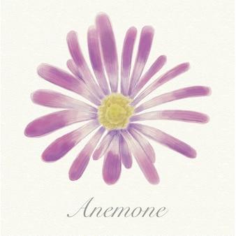 Violet aquarel anemone geïsoleerd