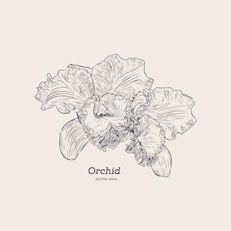 Violette en gele orchidee. hand tekenen schets.