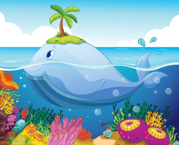 Vis, eiland en koraal in de zee