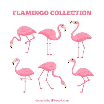 Vlakke flamingo'sinzameling in verschillende stellen
