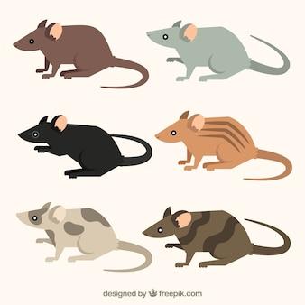 Vlakke muizencollectie met verschillende poses