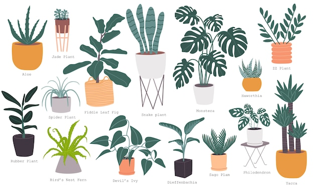 Vlakke stijl vector illustratie set van meest populaire indoor kamerplant collectie met naam.