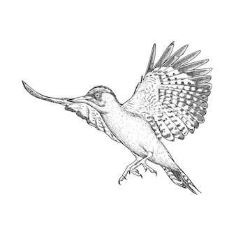 Vliegende vogel illustratie