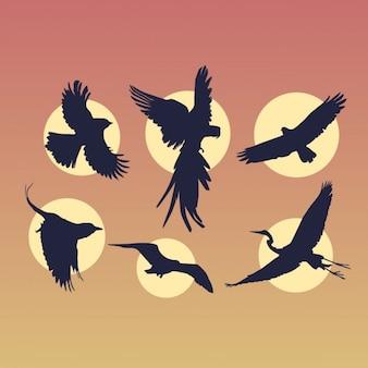 Vliegende vogels silhouetten set