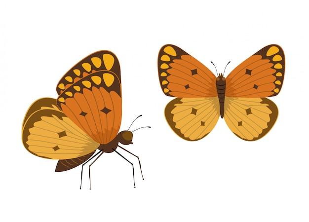 Vlinder illustratie. getrokken insect in vlakke stijl.