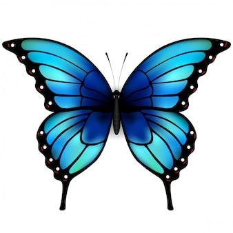 Vlinder met grote blauwe vleugels op een witte achtergrond.