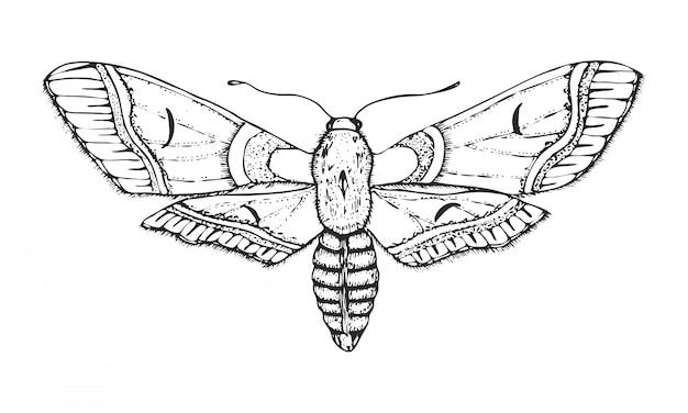 Vlinder of wilde motteninsecten. bombyx mori of binnenlandse zijdemot.