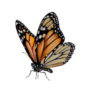 Vlinder uit een scheutje aquarel, gekleurde tekening, realistisch.