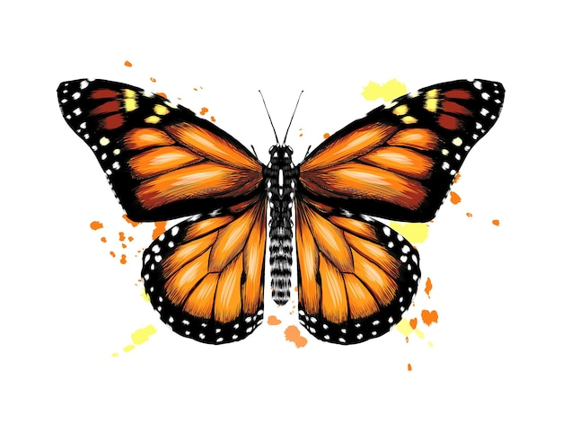 Vlinder uit een scheutje aquarel.