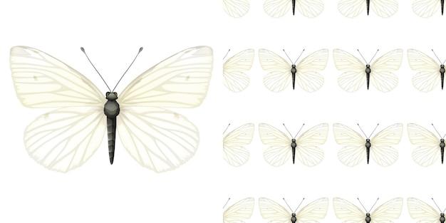 Vlinderinsect en naadloze achtergrond